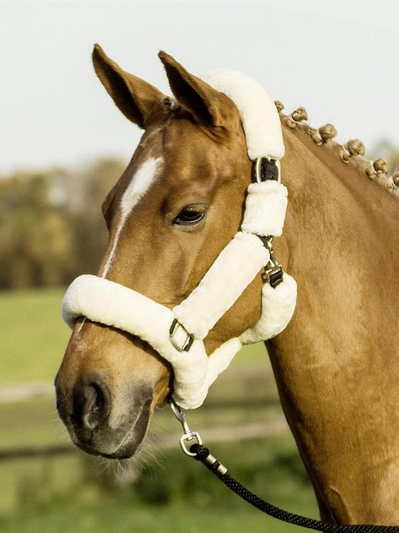 Licol mouton cheval